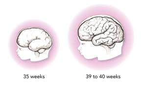 healthy babies are worth the wait, brain development