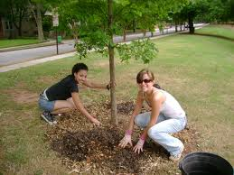 two women planting a tree